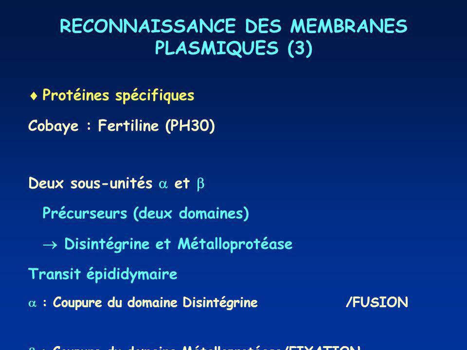 RECONNAISSANCE DES MEMBRANES PLASMIQUES (3)