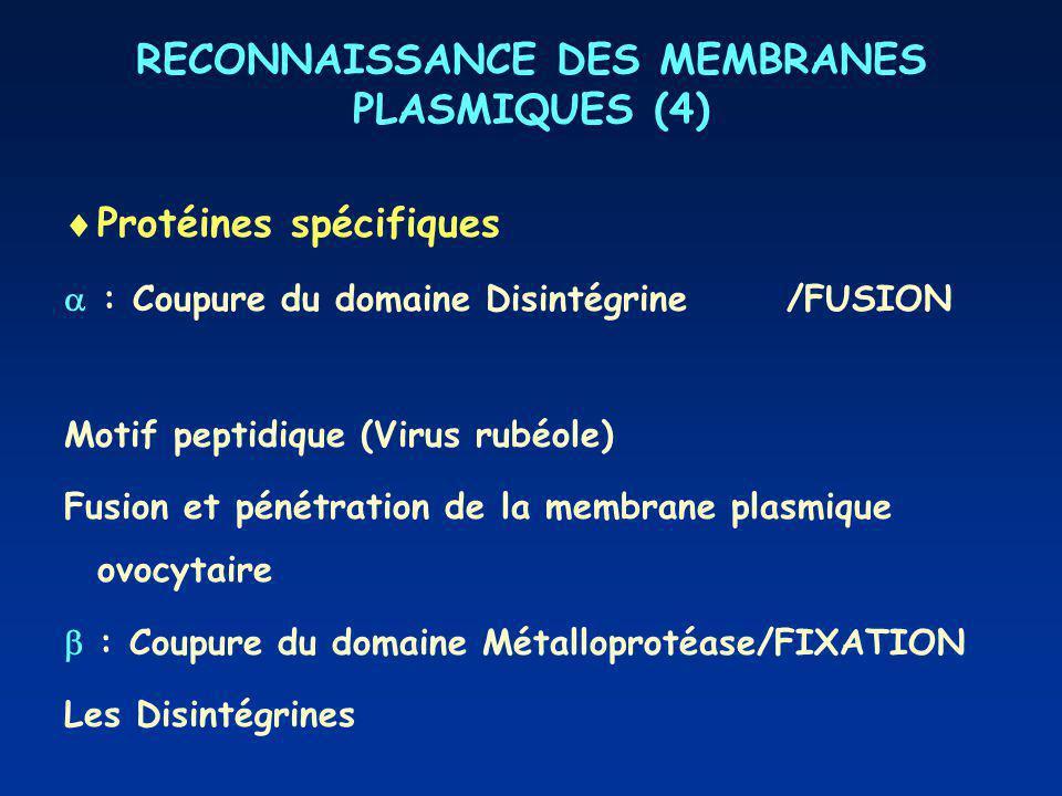 RECONNAISSANCE DES MEMBRANES PLASMIQUES (4)