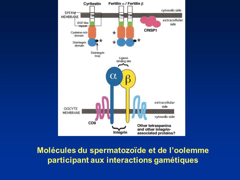 Schematic diagram of sperm and oocyte molecules known to participate in gamete membrane interactions. The diagram shows the approximate relationship of sperm and oocyte adhesion molecules and associated membrane proteins.