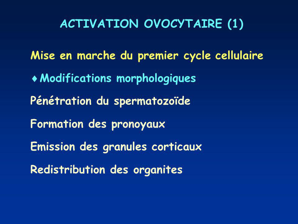ACTIVATION OVOCYTAIRE (1)