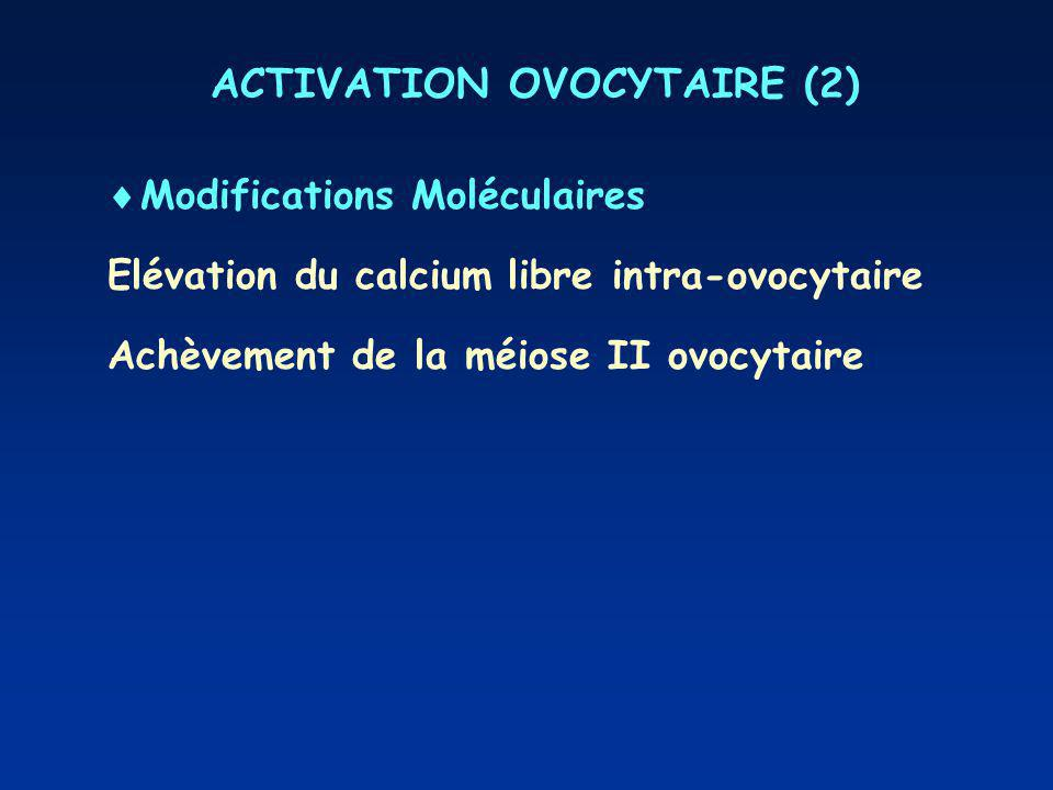 ACTIVATION OVOCYTAIRE (2)