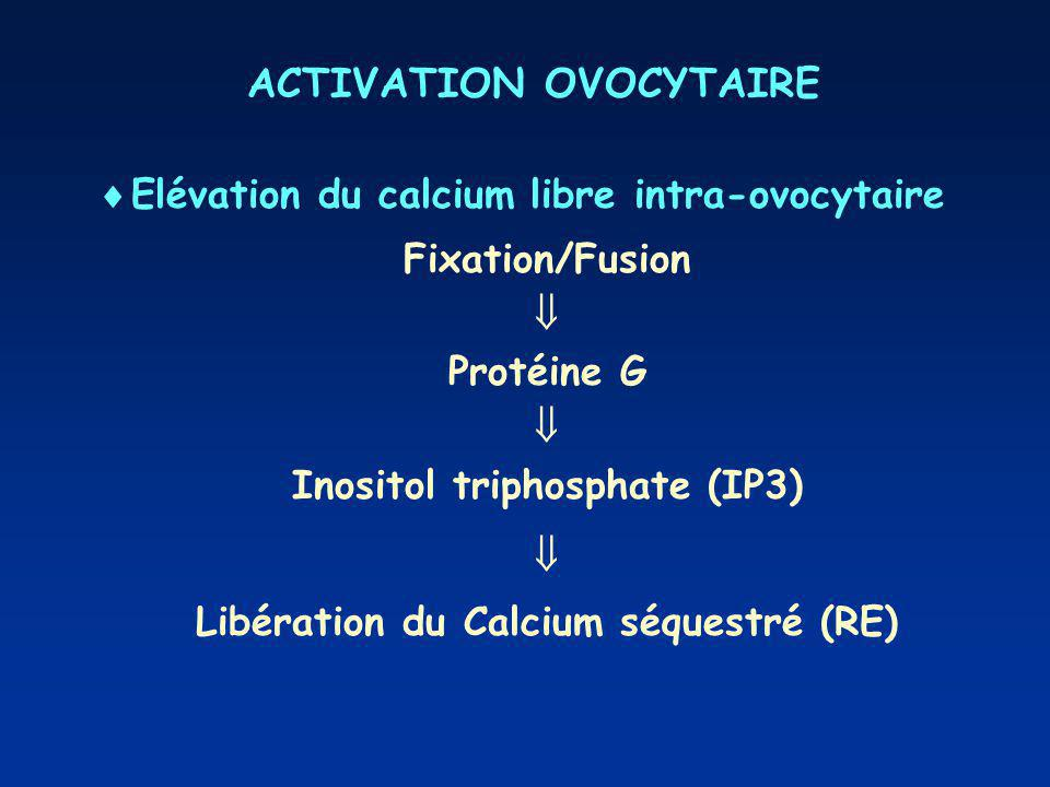 ACTIVATION OVOCYTAIRE
