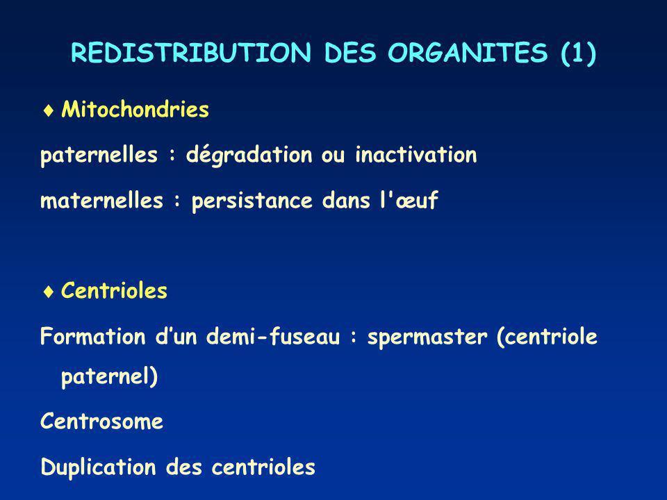 REDISTRIBUTION DES ORGANITES (1)