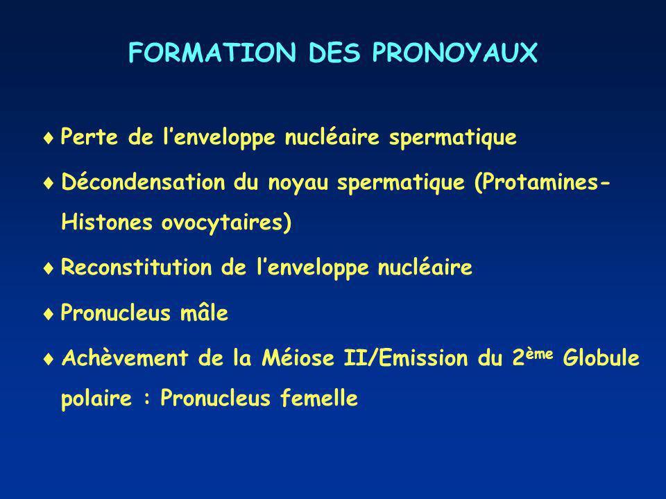 FORMATION DES PRONOYAUX