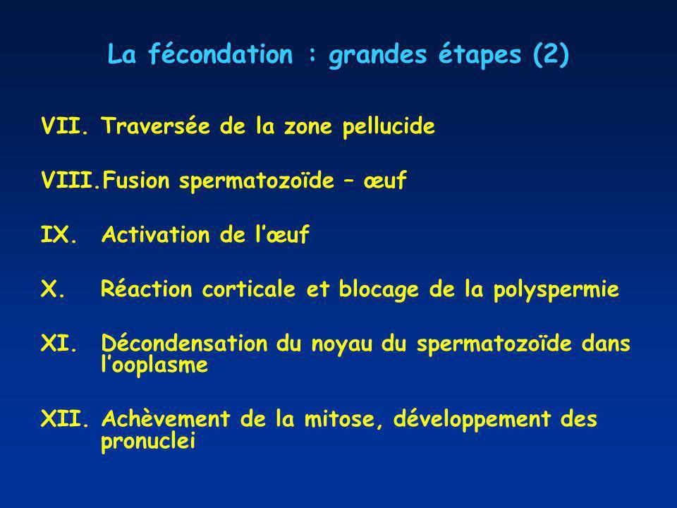 La fécondation : grandes étapes (2)