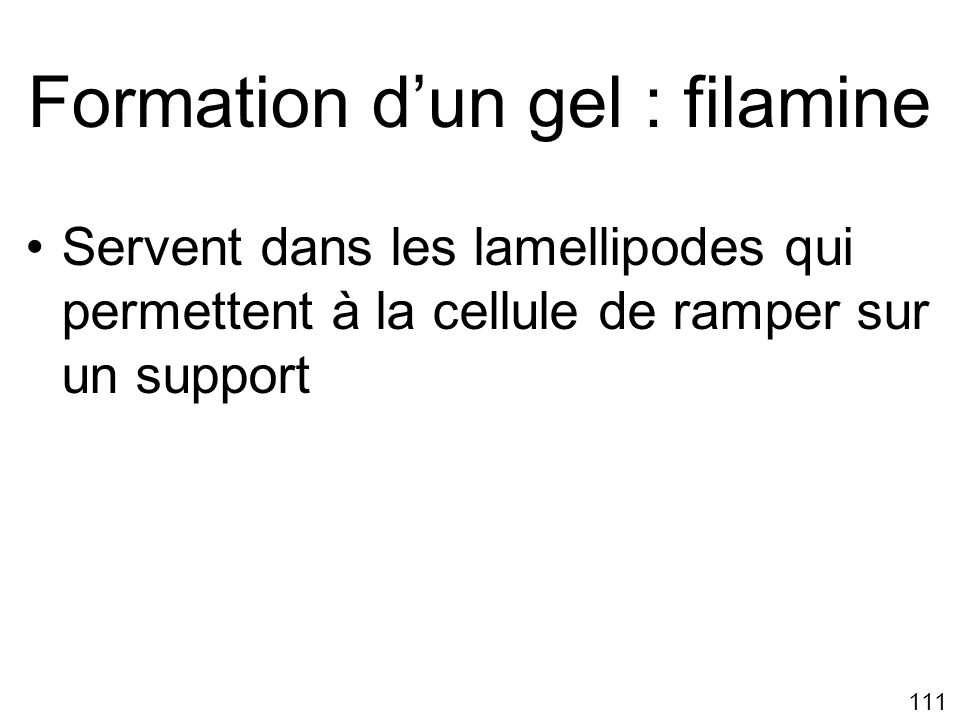 Formation d'un gel : filamine