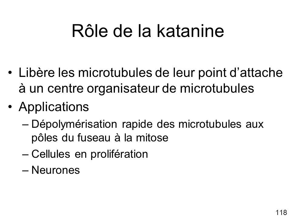 Lundi 22 octobre 2007 Rôle de la katanine. Libère les microtubules de leur point d'attache à un centre organisateur de microtubules.