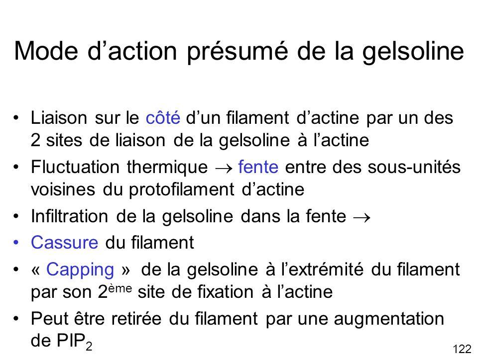 Mode d'action présumé de la gelsoline