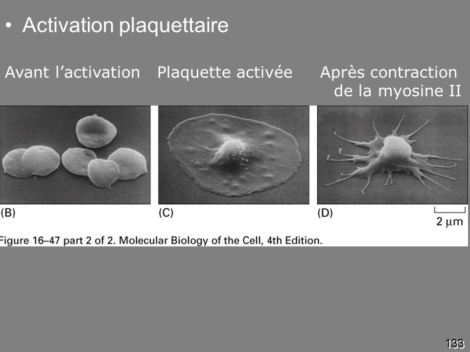 Fig16-47(BCD) Activation plaquettaire