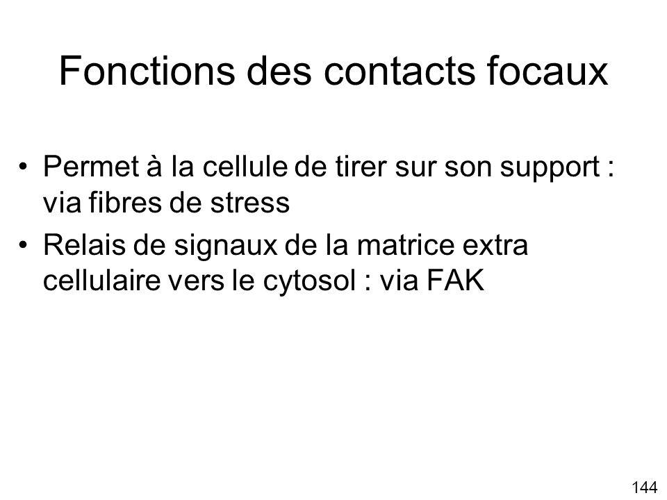 Fonctions des contacts focaux