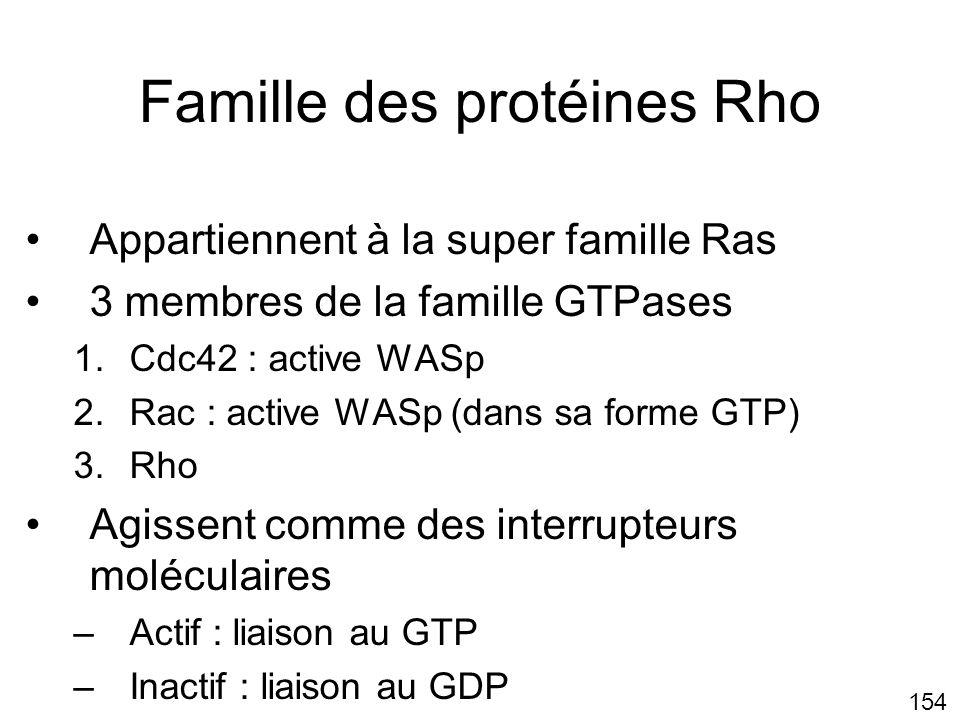 Famille des protéines Rho