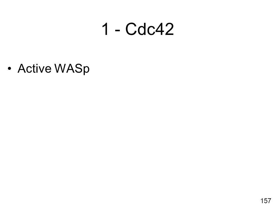 Lundi 22 octobre 2007 1 - Cdc42 Active WASp #13p947