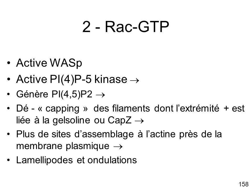 2 - Rac-GTP Active WASp Active PI(4)P-5 kinase  Génère PI(4,5)P2 