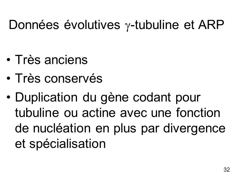 Données évolutives -tubuline et ARP