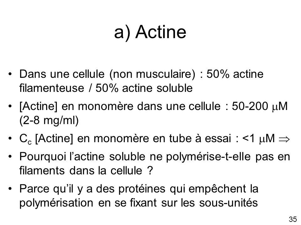 Lundi 22 octobre 2007 a) Actine. Dans une cellule (non musculaire) : 50% actine filamenteuse / 50% actine soluble.