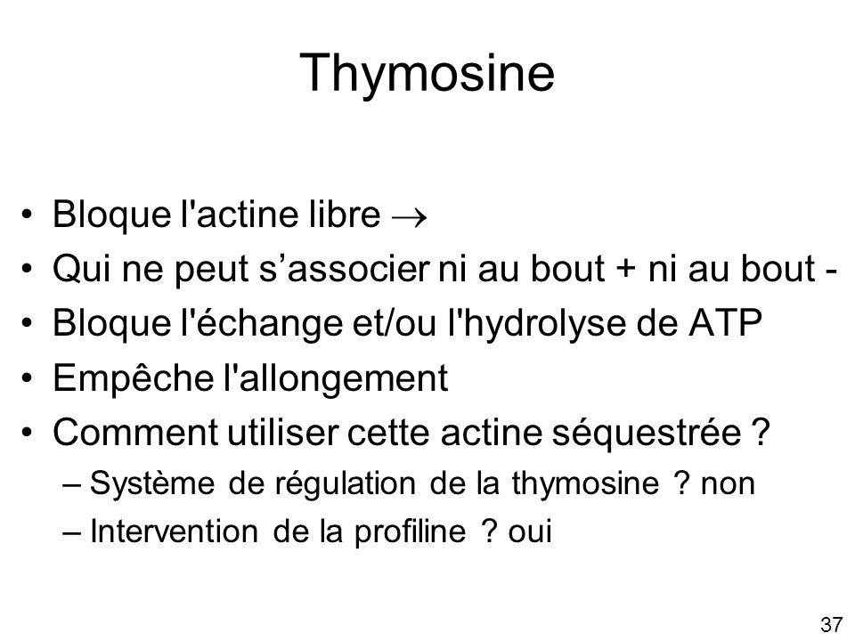 Thymosine Bloque l actine libre 