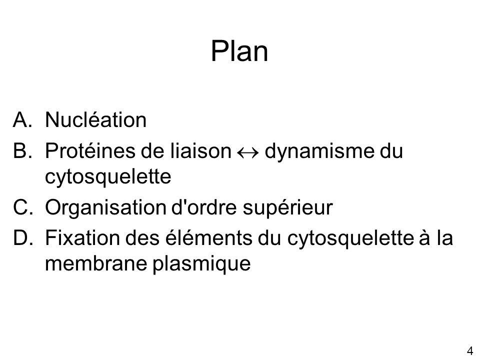 Plan Nucléation Protéines de liaison  dynamisme du cytosquelette
