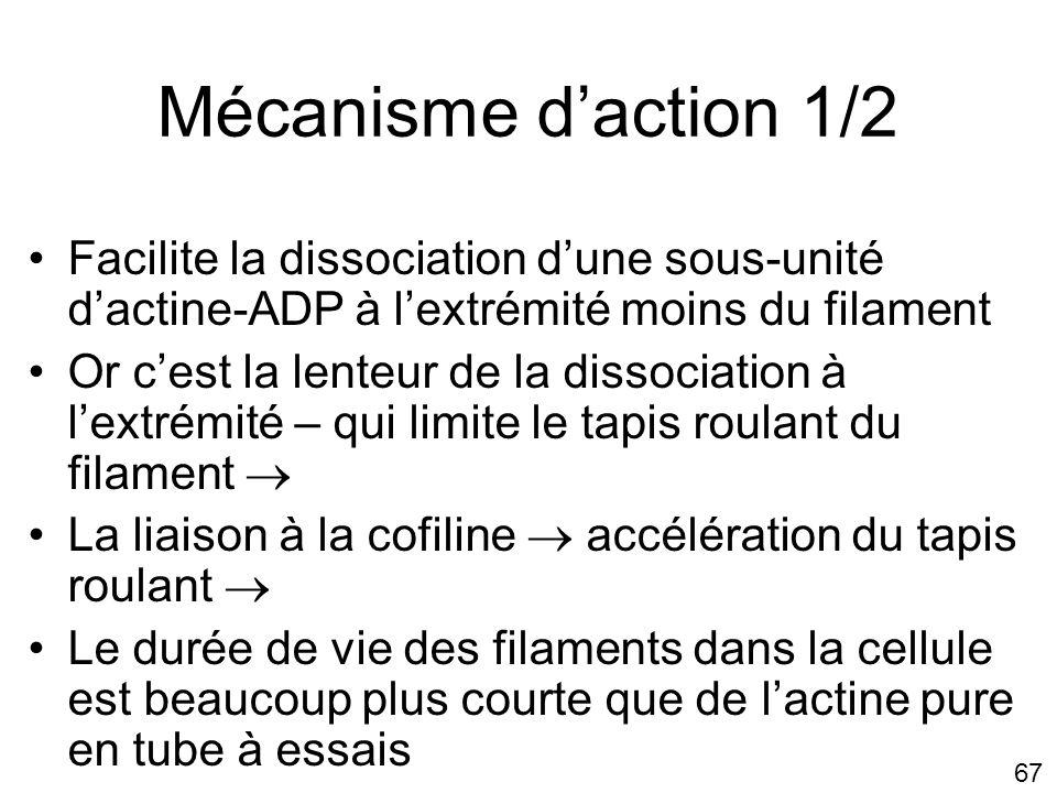 Lundi 22 octobre 2007 Mécanisme d'action 1/2. Facilite la dissociation d'une sous-unité d'actine-ADP à l'extrémité moins du filament.