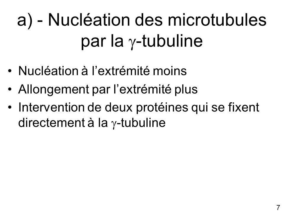 a) - Nucléation des microtubules par la -tubuline