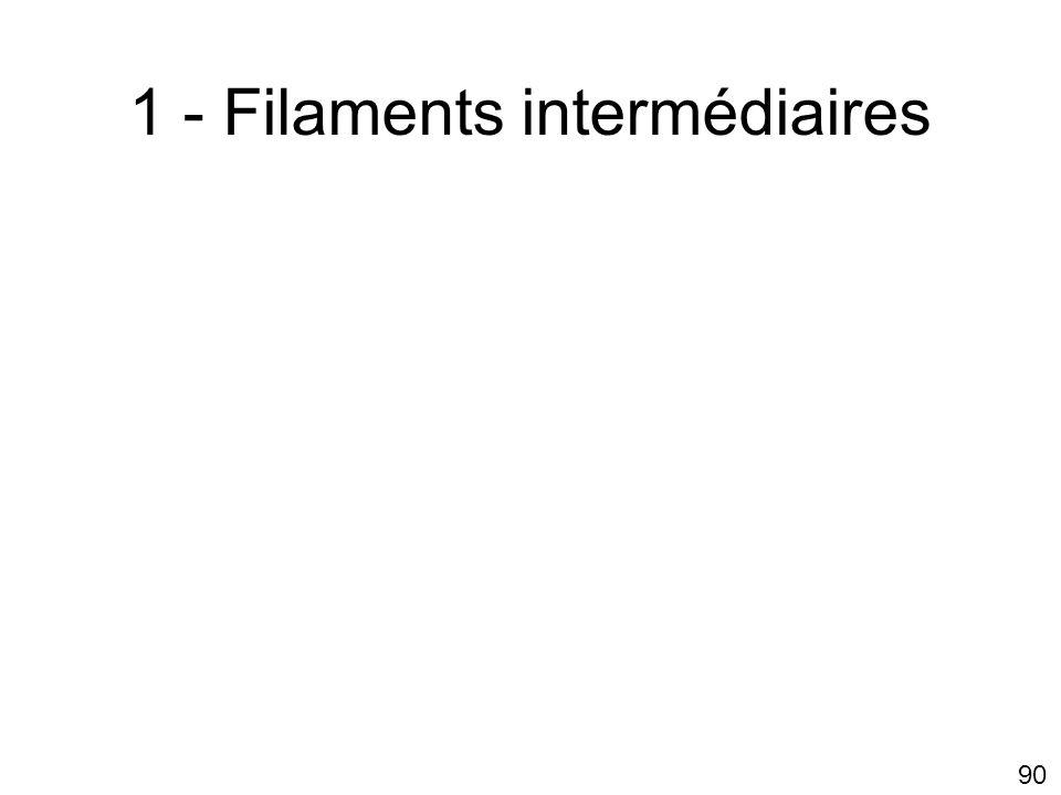1 - Filaments intermédiaires