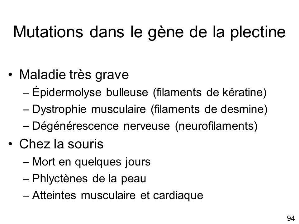 Mutations dans le gène de la plectine