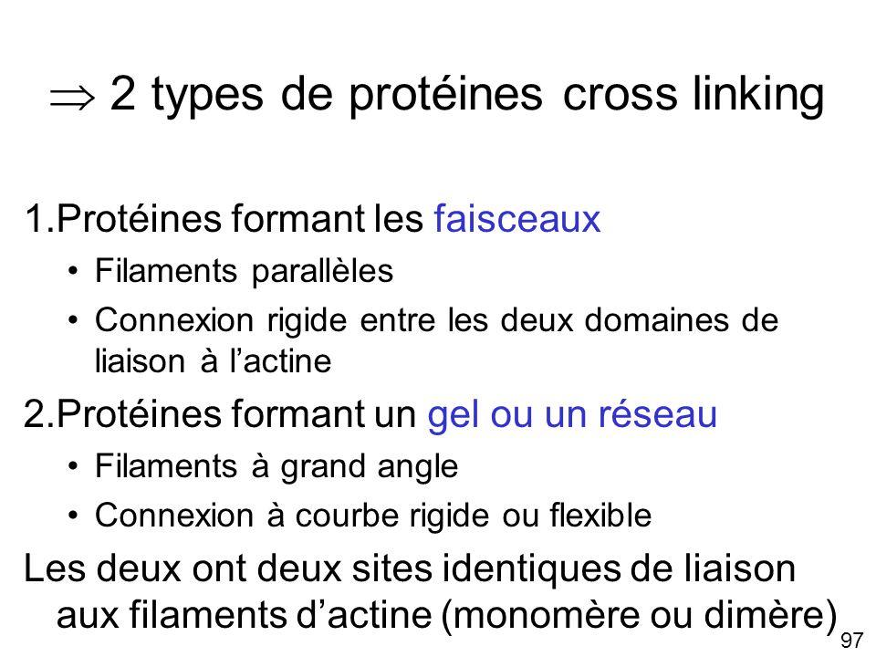  2 types de protéines cross linking