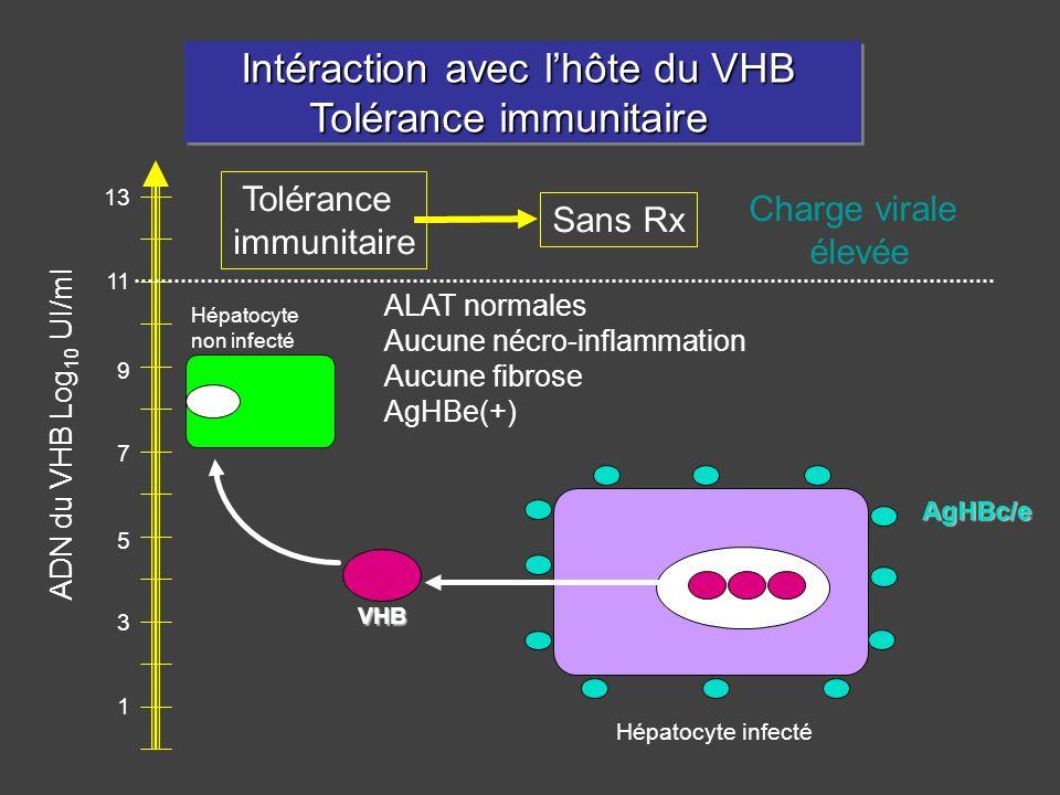 Intéraction avec l'hôte du VHB Tolérance immunitaire