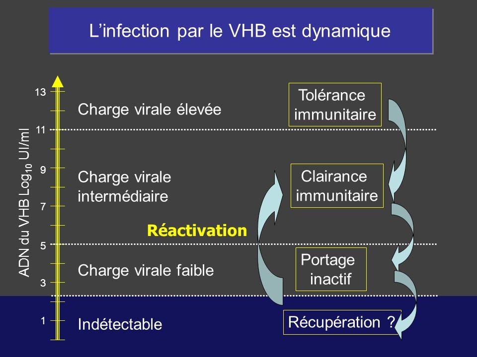 L'infection par le VHB est dynamique