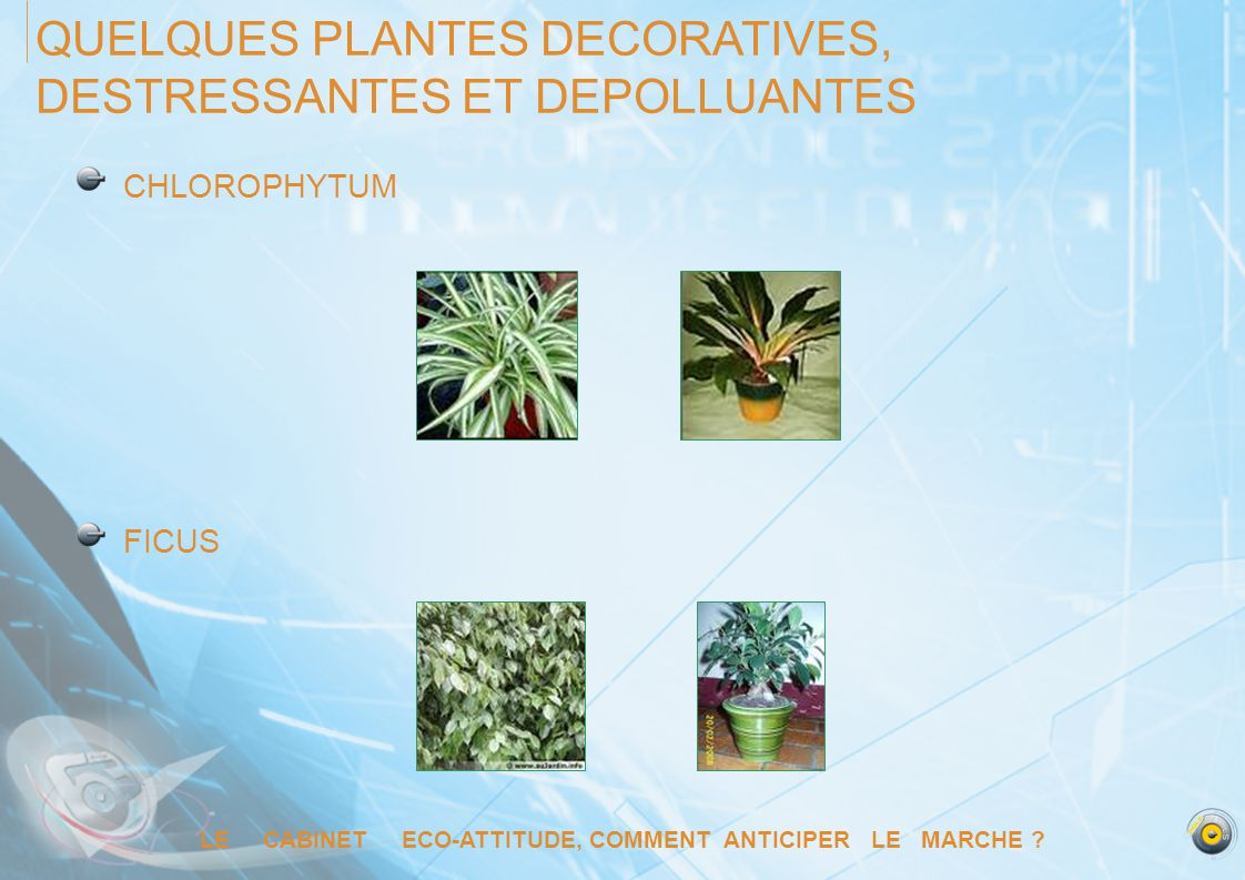 QUELQUES PLANTES DECORATIVES, DESTRESSANTES ET DEPOLLUANTES