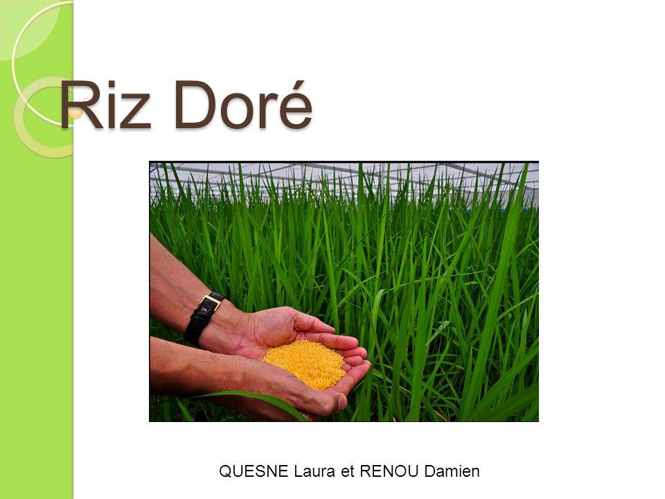 Riz Doré QUESNE Laura et RENOU Damien