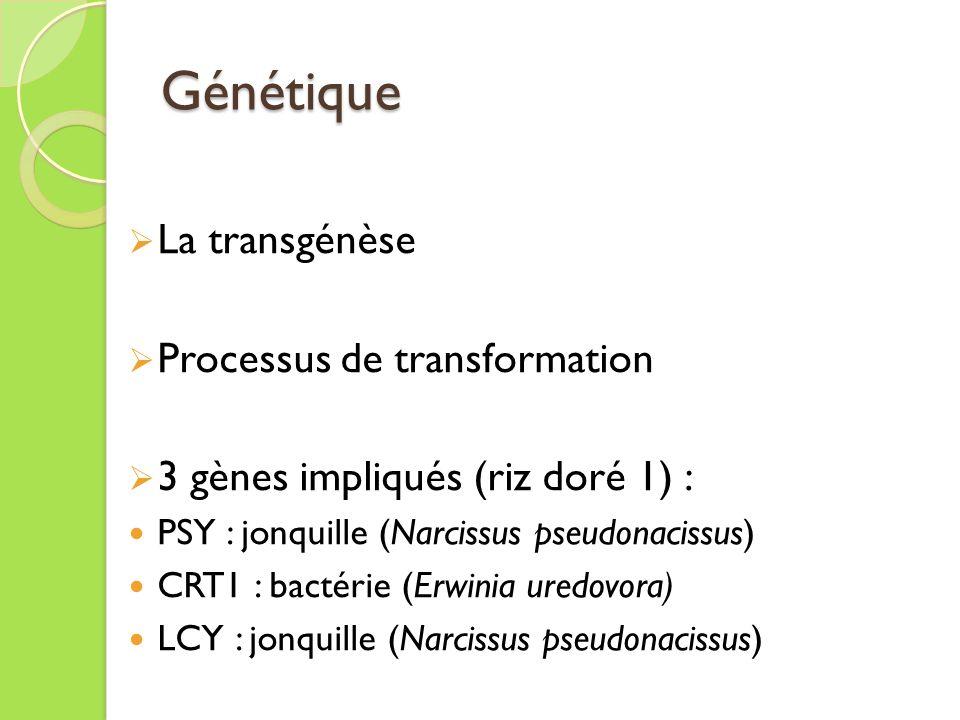 Génétique La transgénèse Processus de transformation
