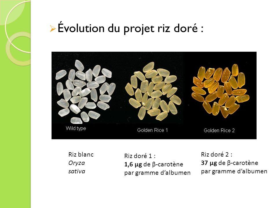 Évolution du projet riz doré :