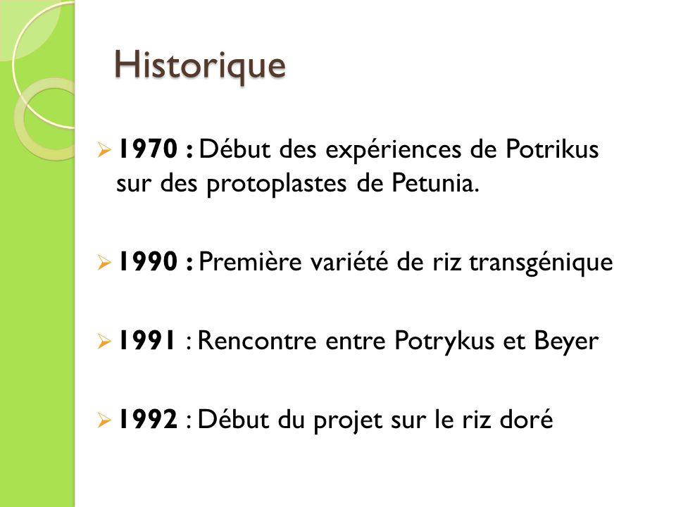 Historique 1970 : Début des expériences de Potrikus sur des protoplastes de Petunia. 1990 : Première variété de riz transgénique.