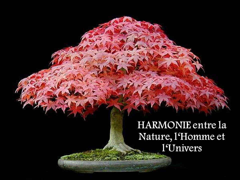 HARMONIE entre la Nature, l'Homme et l'Univers