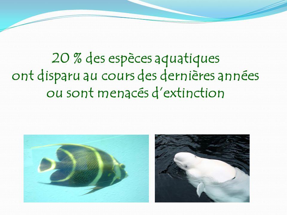 20 % des espèces aquatiques ont disparu au cours des dernières années ou sont menacés d'extinction