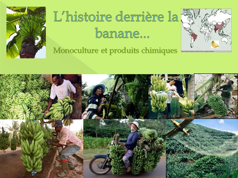 L'histoire derrière la banane...