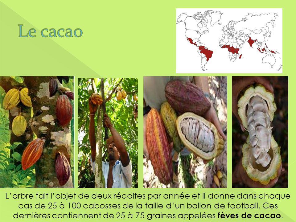 Le cacao Démonstration du produit. Faites circuler un échantillon ou faites la démonstration en avant.