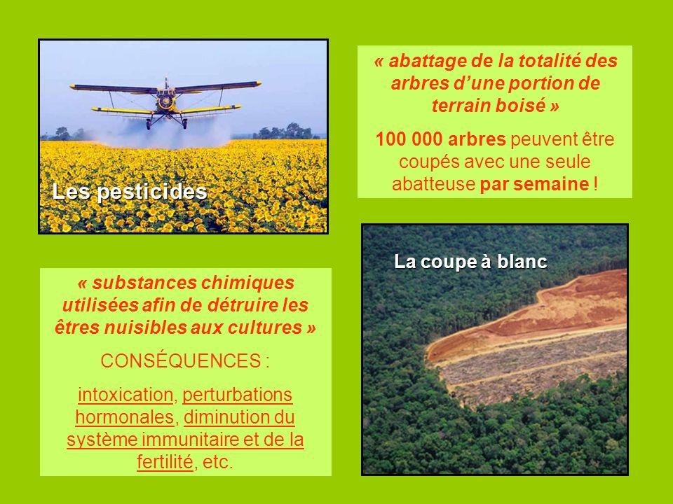 « abattage de la totalité des arbres d'une portion de terrain boisé »