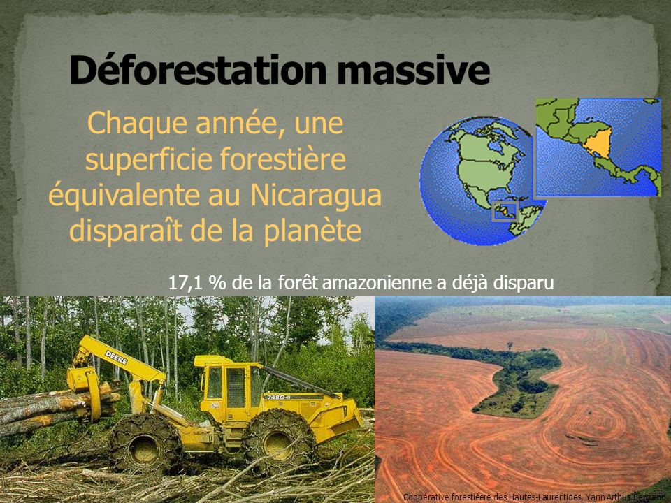 Déforestation massive