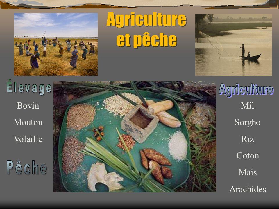 Agriculture et pêche Élevage Bovin Mouton Volaille Mil Sorgho Riz