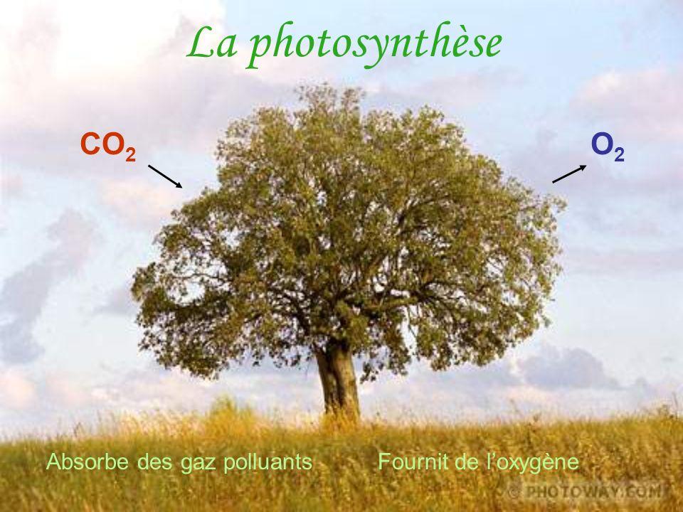La photosynthèse CO2 O2 Absorbe des gaz polluants Fournit de l'oxygène