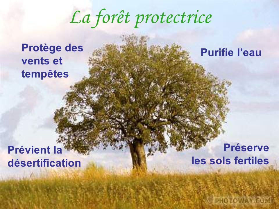 La forêt protectrice Protège des vents et tempêtes Purifie l'eau