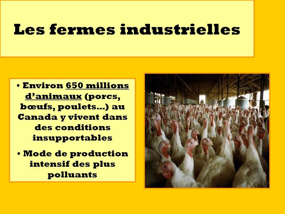 Les fermes industrielles