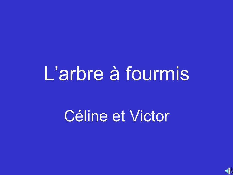 L'arbre à fourmis Céline et Victor