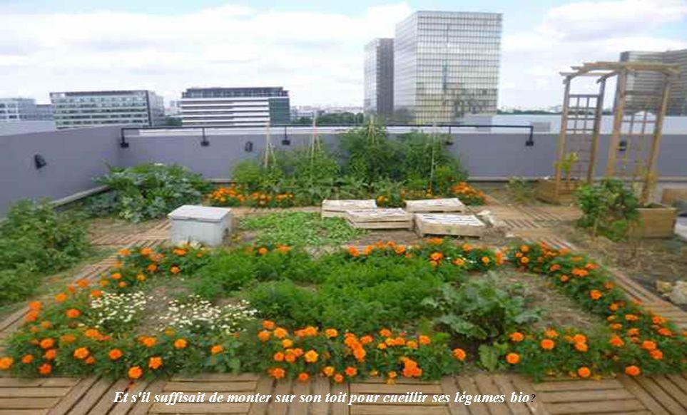 Et s il suffisait de monter sur son toit pour cueillir ses légumes bio