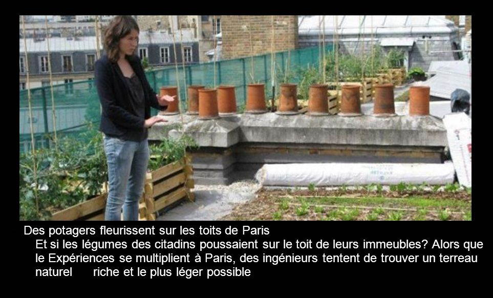 Des potagers fleurissent sur les toits de Paris