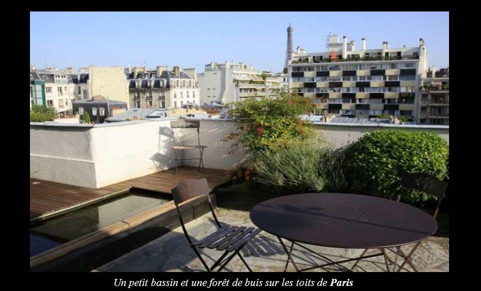 Un petit bassin et une forêt de buis sur les toits de Paris