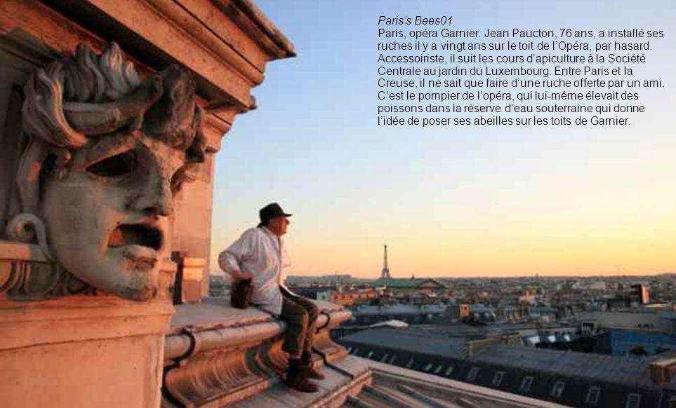 Paris's Bees01