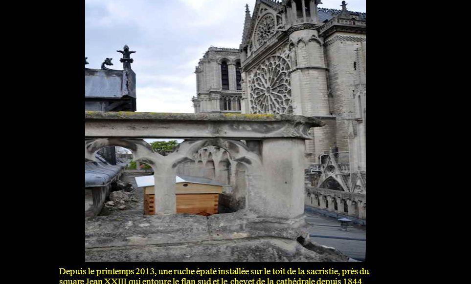 Depuis le printemps 2013, une ruche épaté installée sur le toit de la sacristie, près du square Jean XXIII qui entoure le flan sud et le chevet de la cathédrale depuis 1844