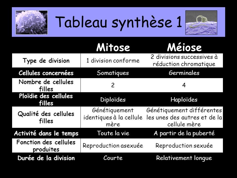 Tableau synthèse 1 Mitose Méiose Type de division 1 division conforme